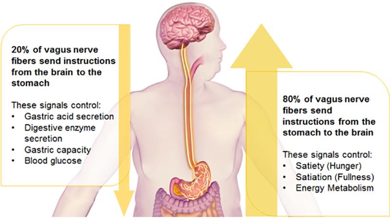 Mind Body Health And Your Vagus Nerve Simon Maryan The Mind Body